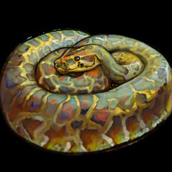 Burmese Floridian Python image
